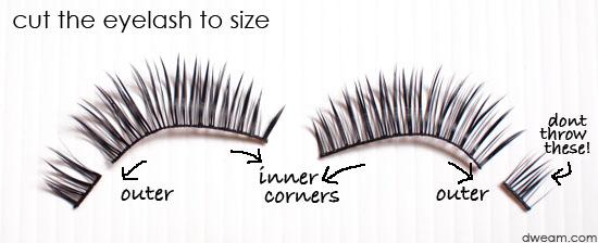 False Eyelashes Application for Beginners (1)